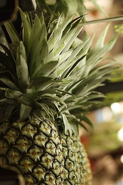 Photo Credit: Unavailable, http://i.ehow.com/images/GlobalPhoto/Articles/5133825/Pineapple-main_Full.jpg